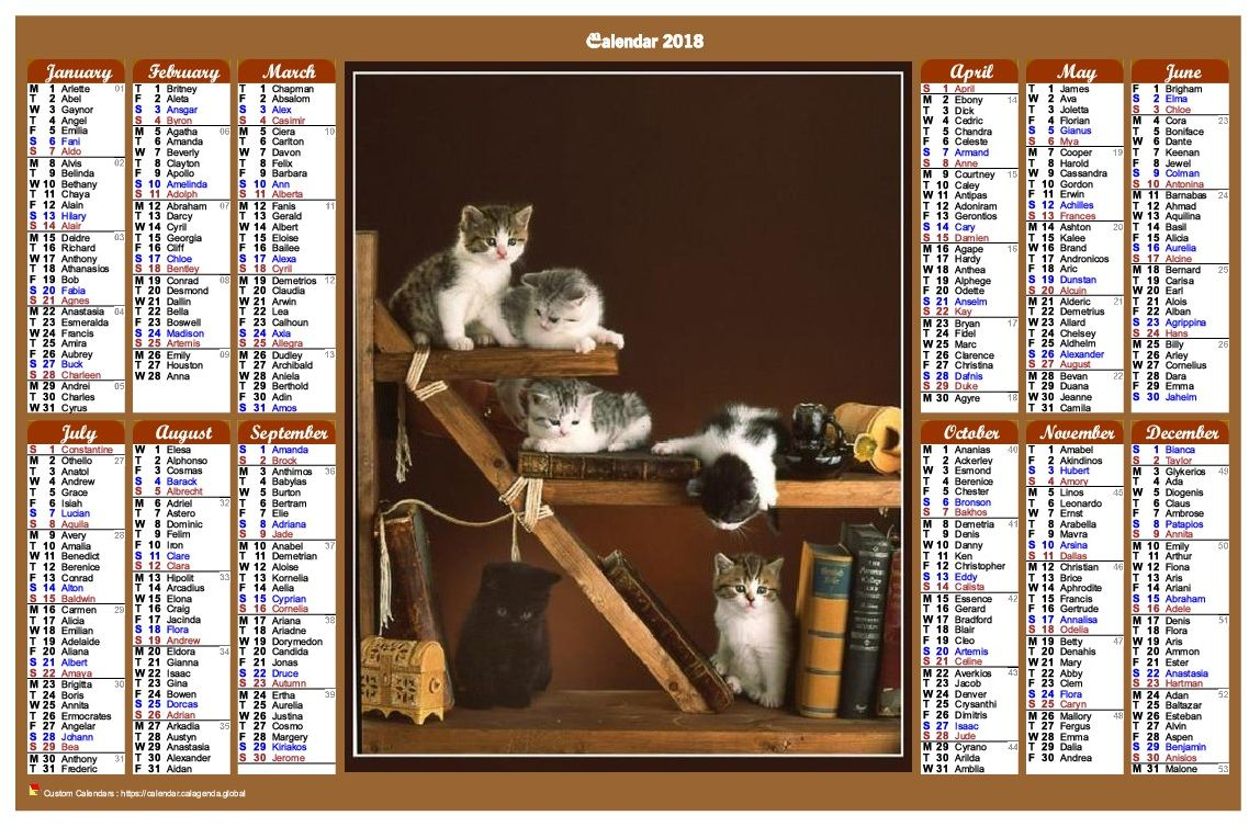 Calendar 2018 annual of style calendar of posts with cats