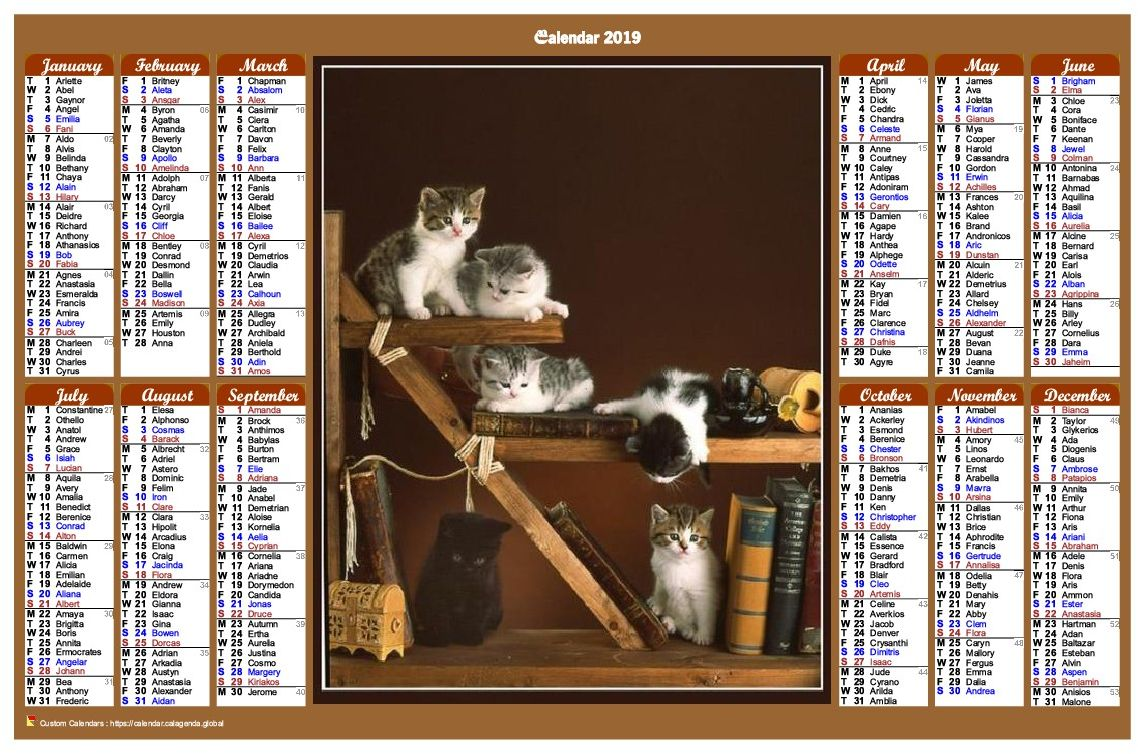 Calendar 2019 annual of style calendar of posts with cats
