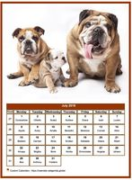 July 2019 calendar of serie 'dogs'