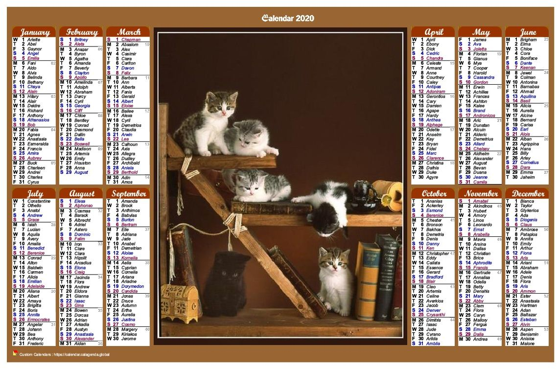 Calendar 2020 annual of style calendar of posts with cats