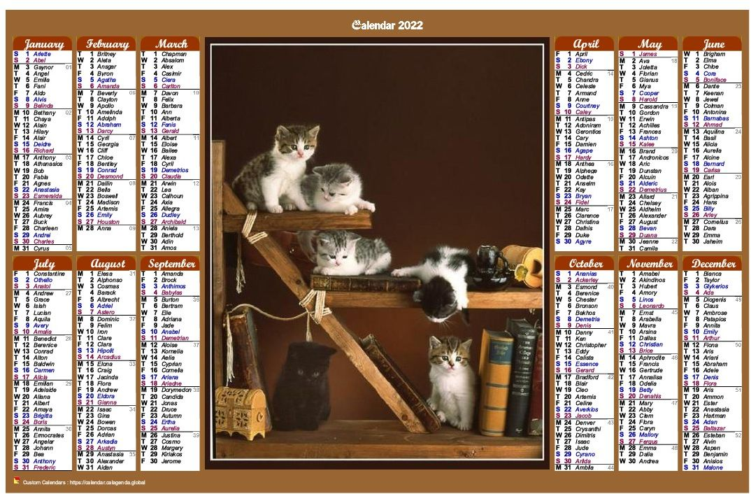 Calendar 2022 annual of style calendarof posts with cats